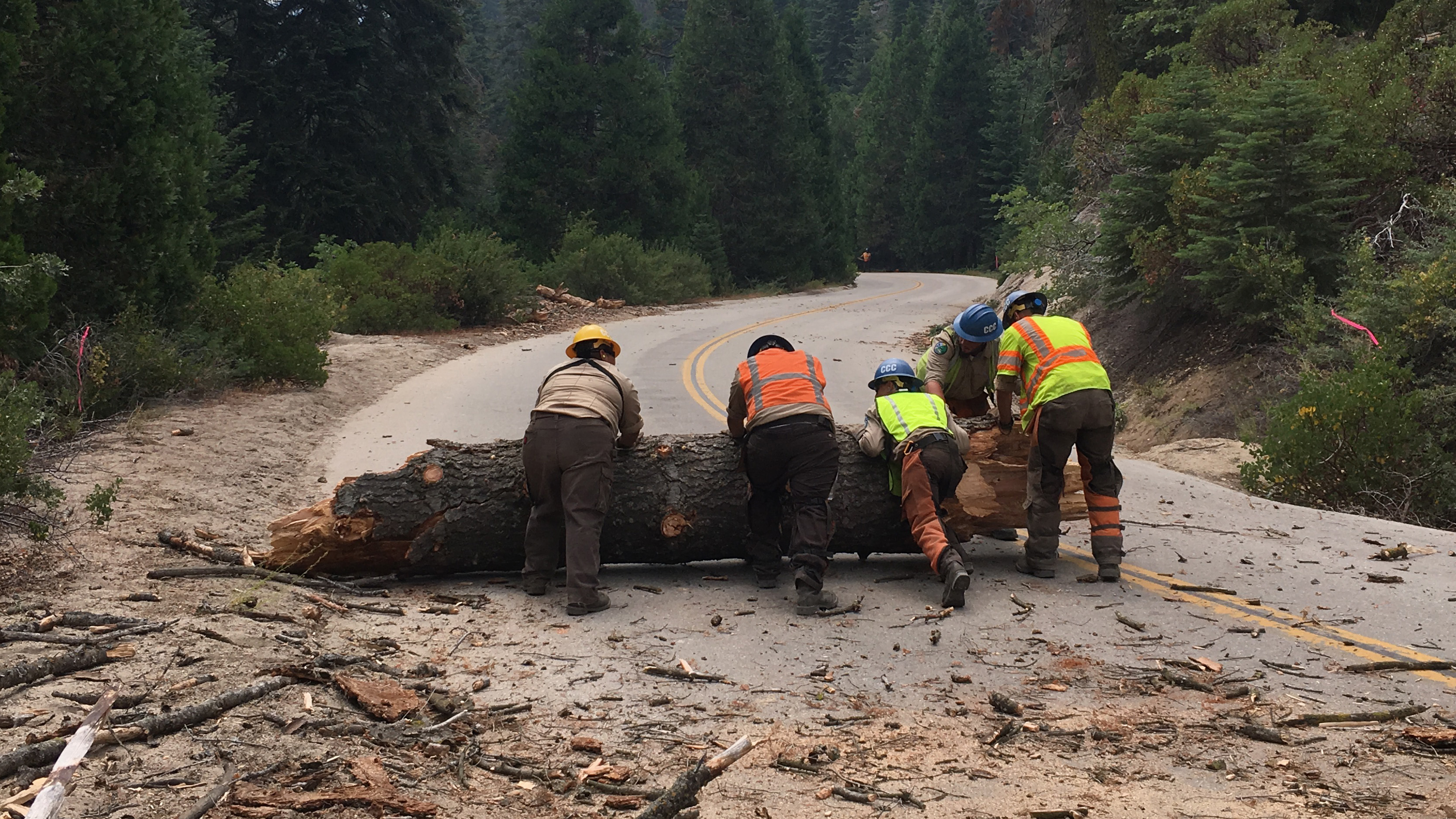 Image. Corpsmembers and supervisor push large tree trunk out of road after felling the tree.