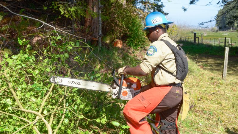Corpsmember Cameron Wilson uses a chain saw