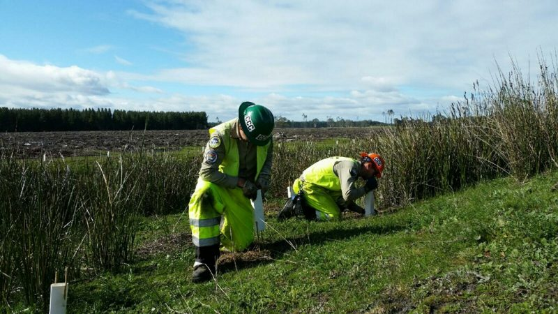 Corpsmembers in green and orange helmets and reflective safety gear plant native species in Australian field.