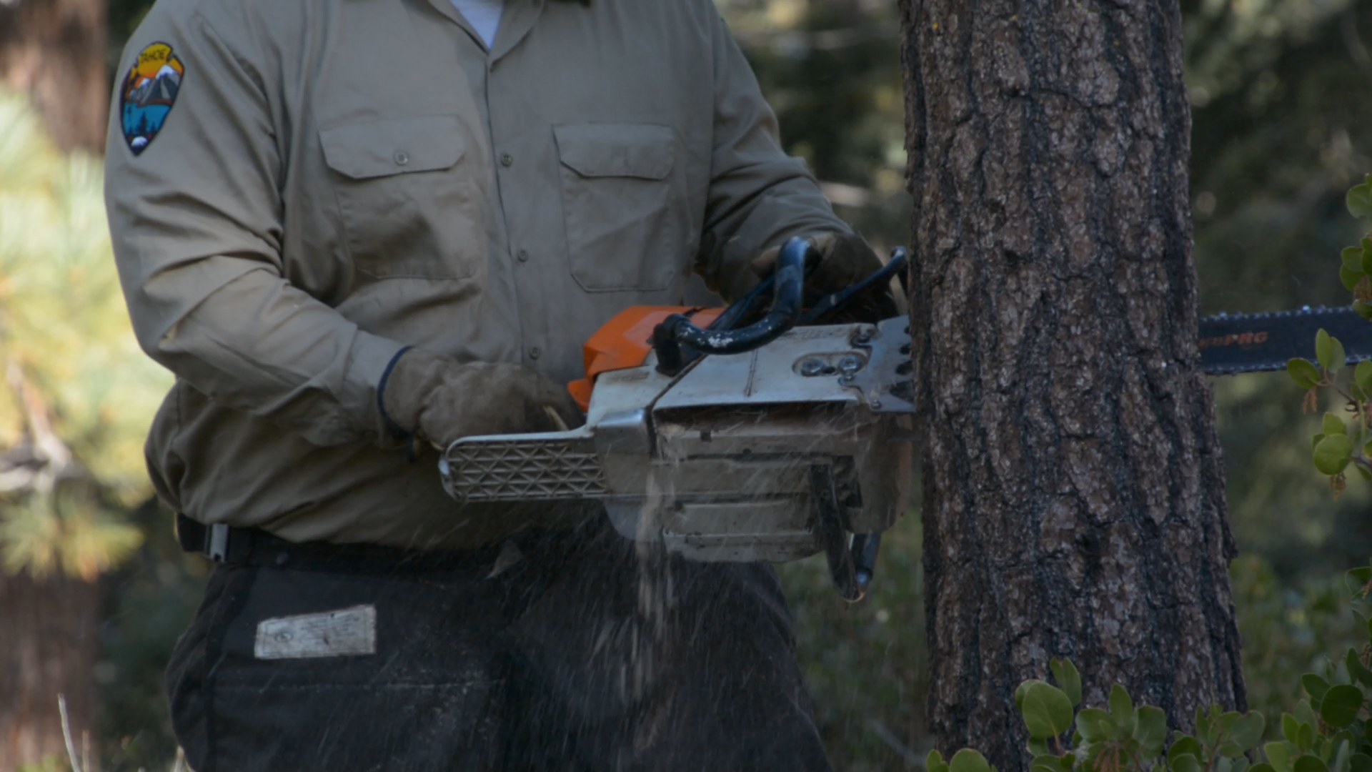 image Corpsmember cutting tree