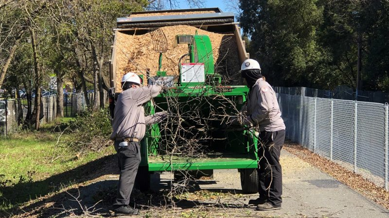 Two men put branches in wood chipper