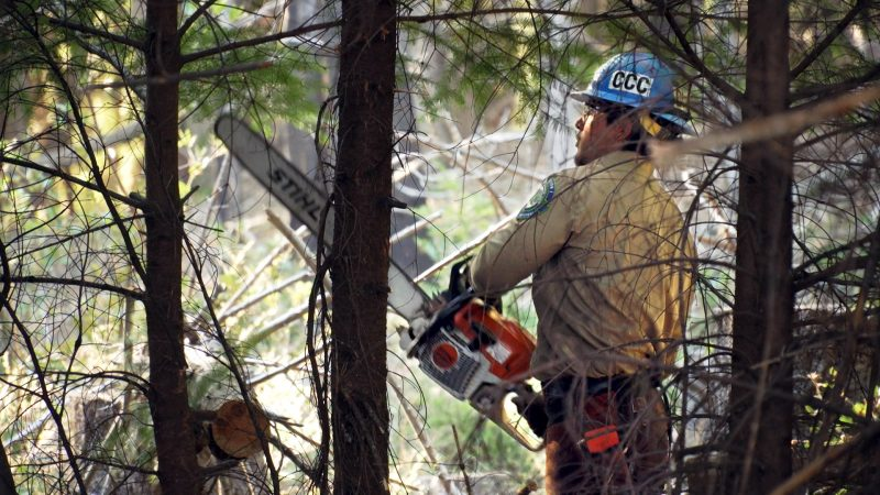 Male Corpsmember in safety equipment uses chain saw to cut down branches in forest.