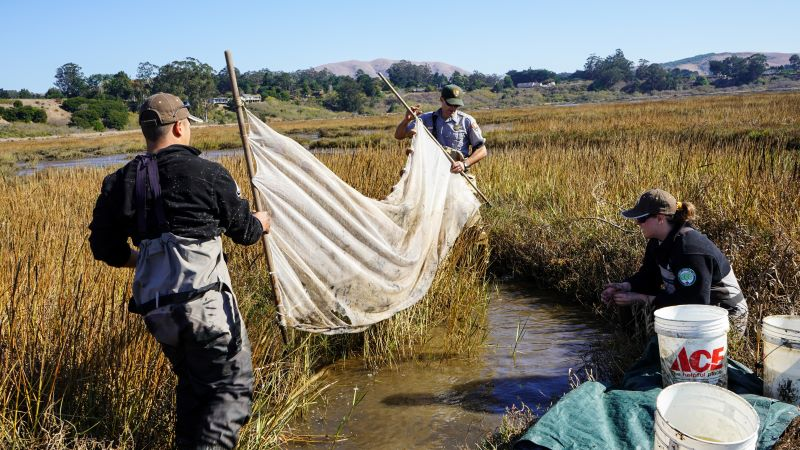 Corpsmember and NPS staffer hold long fishing net, while a second Corpsmember observes from the side in a marsh.