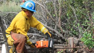 Corpsmember in full wildland fire apparel drops his left knee to the ground to use a chain saw to cut brush at ground level.
