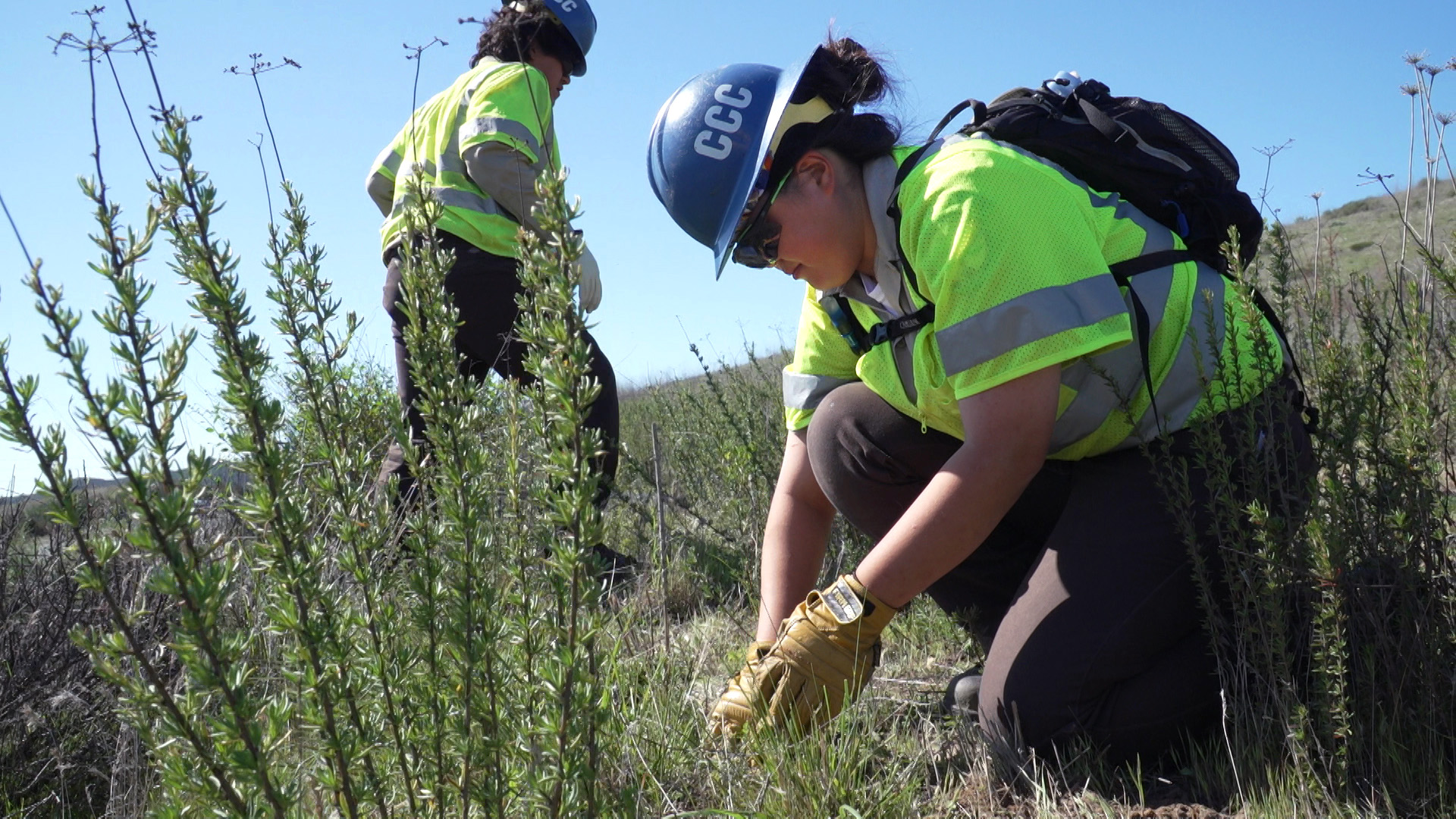 Female Corpsmember plants cactus pad in background, brush appears in photo's foreground.