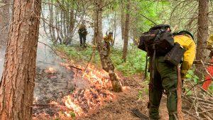 Wildland firefighting corpsmembers cutting line.