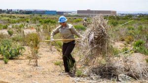 female corpsmember using pitchfork hauls invasive species debris away